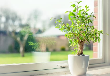 植物 窓 グリーン