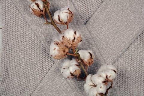 コットン 綿