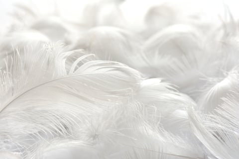 羽毛布団 フェザー