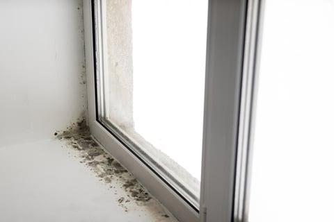 窓際の黒カビ