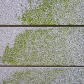 外壁のコケの取り方 洗剤で落とせる?高所はどうする?