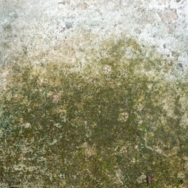 コンクリート 壁 苔 コケ