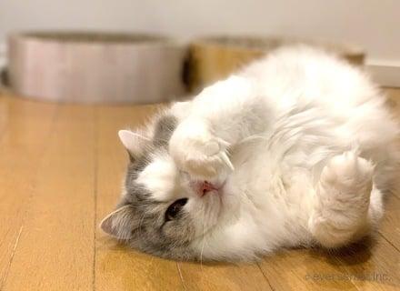 猫 ペット 抜け毛 フローリング