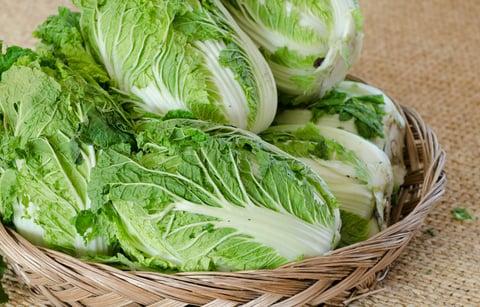 白菜 野菜 保存