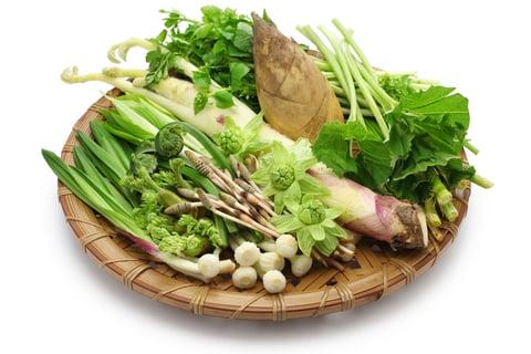 山菜 野菜