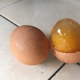 冷凍卵 保存