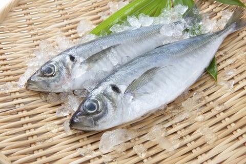 魚 鯵 アジ あじ