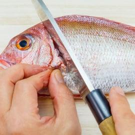 魚 鯛 タイ さばき方 下処理 頭落とし