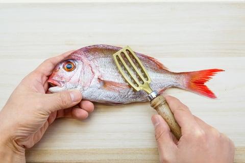 魚 タイ 鯛 さばき方 下処理 うろこ ウロコ取り