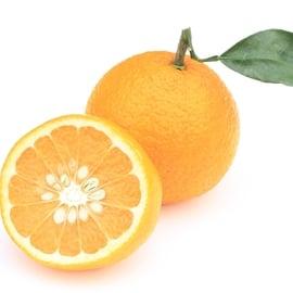 はっさく 八朔 柑橘